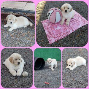 Paislee/Moose puppy born 11-27-2020